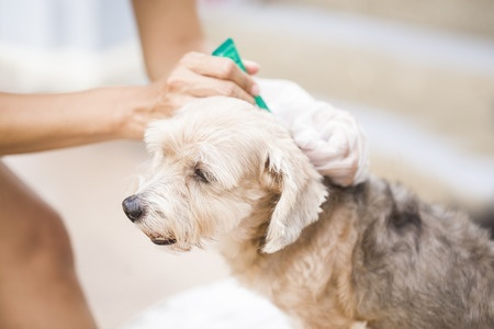 flea and tick treatment