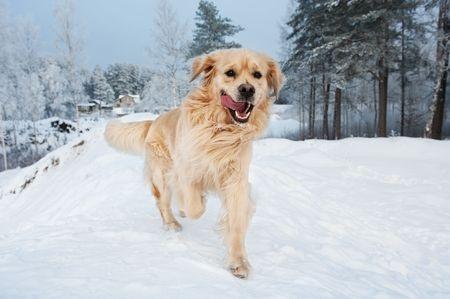 Goofy Dog in Winter