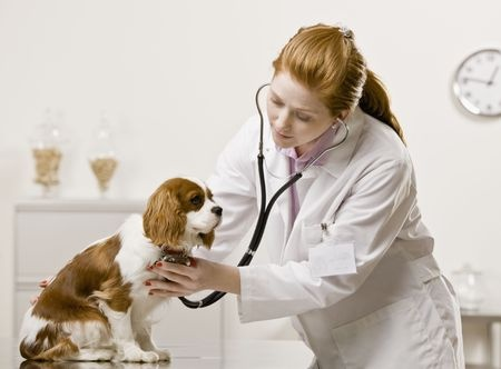 Taking Your Pet to Veterinarian